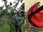 ricerca vitigni perduti nell'arca della biodiversità Salento leccese