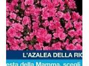 """Festa della Mamma: l'AIRC piazza Giuseppe """"Azalee Ricerca"""""""