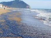 Lazio spiagge sono blu!