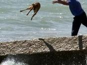 Maltrattare animali stupido cattivo!