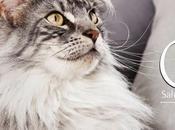 Chanel testa croccantini PurinaOne Sterilcat gatti sterilizzati