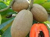 mamey sapote frutto bellezza molto altro