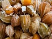 Pichuberry Physalis peruviana Uciuva