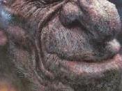 Charles Bukowski wallpaper