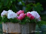 #fioridivenerdì romanticamente paeonia