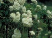 #fioridivenedì- Rosa Bouquet Mariée