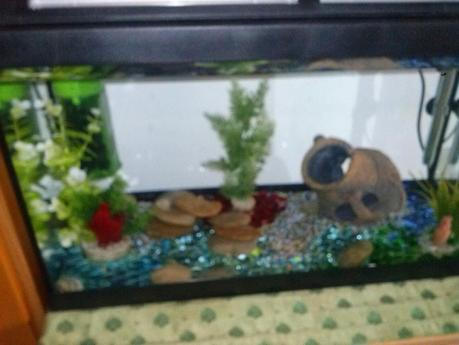 Come allestire un acquario per pesci rossi paperblog for Termostato per acquario tartarughe