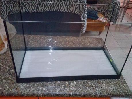 Come allestire un acquario per pesci rossi paperblog for Vasche esterne per pesci rossi