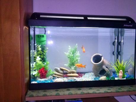 Come allestire un acquario per pesci rossi paperblog for Acqua acquario