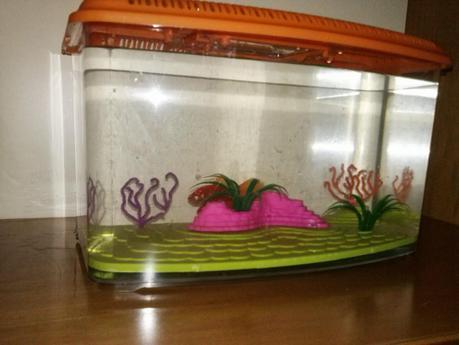 Come allestire un acquario per pesci rossi paperblog for Filtro vasca pesci