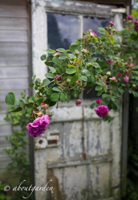 un giardino tutto per s paperblog