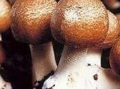 Proprietà dell'Agaricus