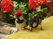 Uccelli anatomia