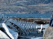 """Cannes """"Leviathan"""" (Premio Miglior Sceneggiatura)"""