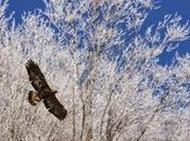 maggiori minacce canguri arboricoli sono perdita habitat forestale caccia.