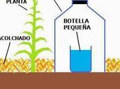 Tecnica irrigazione acqua salata provenienza marina acque salmastre