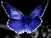quercia farfalla