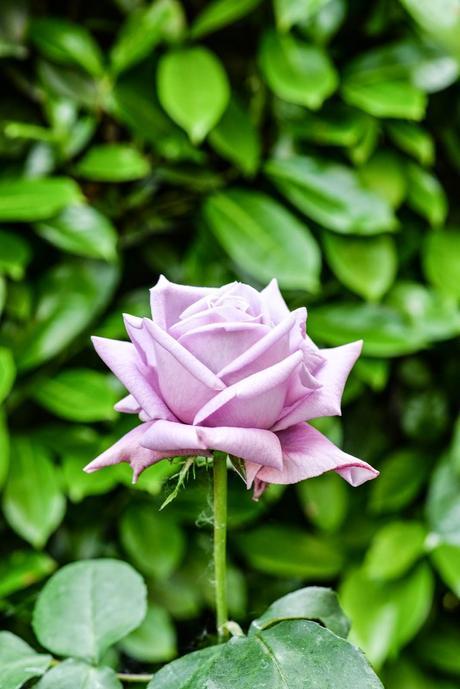 Giardino romantico piante e fiori profumati paperblog - Fiori gialli profumati ...
