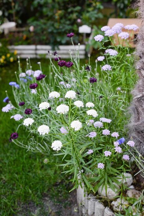 Giardino romantico piante e fiori profumati paperblog for Fiori bianchi profumati