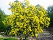 Color style: matrimonio giallo