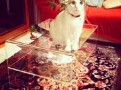Tavolini salotto plexiglass trasparente: amati gatti italiani.