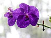 """""""Fattoria delle Orchidee"""" Pattaya"""
