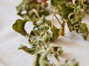 Herbs Lovely little things