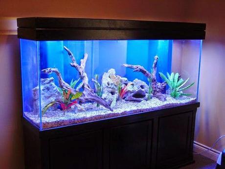 Cambiare l 39 acqua nell 39 acquario di casa varie paperblog - Acquario in casa ...