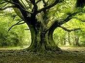 Albero penso albero.Non qualsiasi...