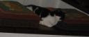 Miao-chat