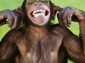 Quando scimmie organizzano concerti: METALLICA @Rock Roma, 01.07.2014