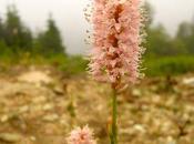 Ancora fiori sotto nebbia montagna i...