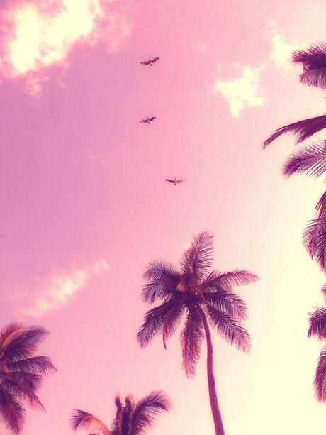 palms-in-the-sky