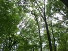 Lombardia: Consiglio Regionale vota legge ammazza-foreste