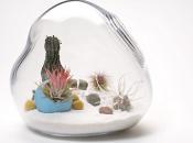 What's terrarium