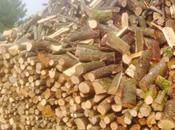 fine fatto decreto legno illegale?