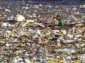 """""""Inquinamento Mare: l'Enigma della Plastica c'è!"""""""
