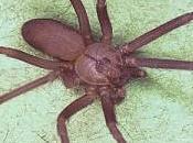 Rimedi della Nonna punture ragno