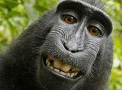 selfie, questi obbrobri