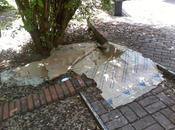 Centocelle cercando recuperare parco Madre Teresa Calcutta. Oggi, come sbagli, stato raccapricciante