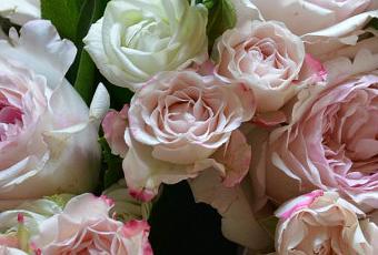 Rose inglesi david austin per il bouquet della sposa for Rose inglesi