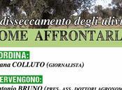 ulivi seccano. fai? prevenzione nell'arco adriatico agosto, Castiglione d'Otranto
