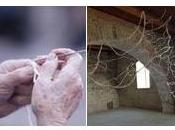 installazioni Adrian Paci, Claudia Losi Mariangela Capossela allo Sponz Fest Vinicio Capossela, oggi Arti