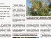 Prof. Giuseppe Fontanazza: Xylella, pianta viva dev'essere estirpata