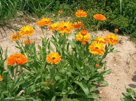 Antiparassitari naturali fai da te per l 39 orto e il for Trasforma un semplice terreno in un colorato giardino