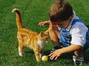 Cani Gatti? Niente allergie.