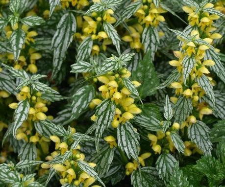 Le piante tappezzanti paperblog - Piante tappezzanti ...