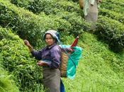 Sikkim: l'India aspetti