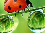 insetti stanno sulle nostre piante parlano