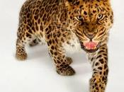 Dieci animali sull'orlo dell'estinzione